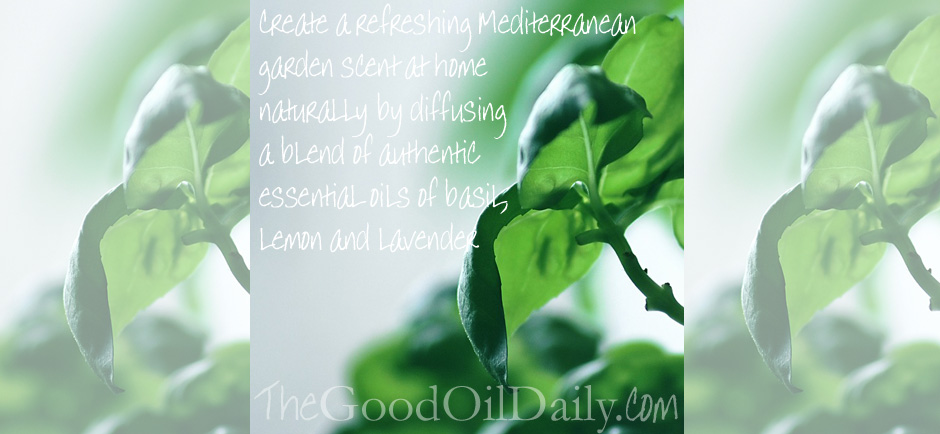 Mediterranean garden scent with essential oils quick tip thursday the good oil daily - Mediterranean garden plants colors and scents ...
