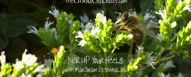 marjoram essential oil, young living, the good oil daily