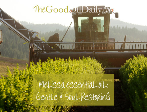 Melissa Essential Oil : Gentle and Soul Restoring