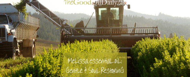 melissa essential oil, young living, the good oil daily